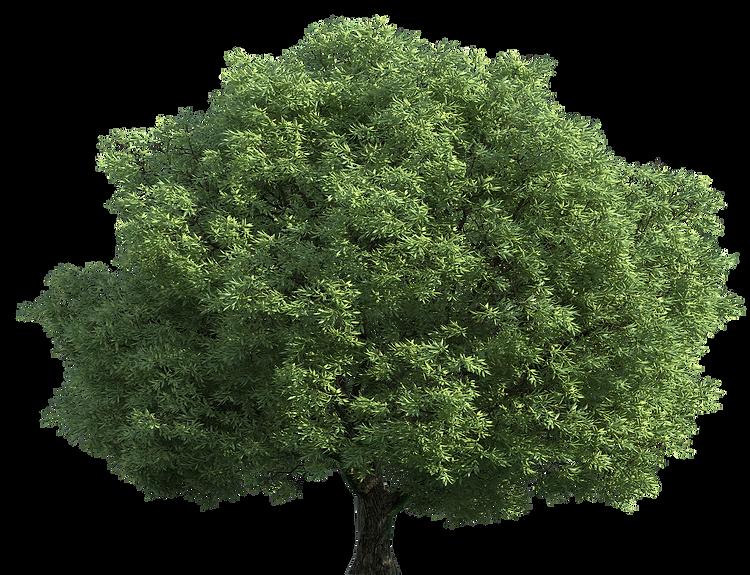 Realistic_Green_Tree_PNG_Clip_Art-1102.p