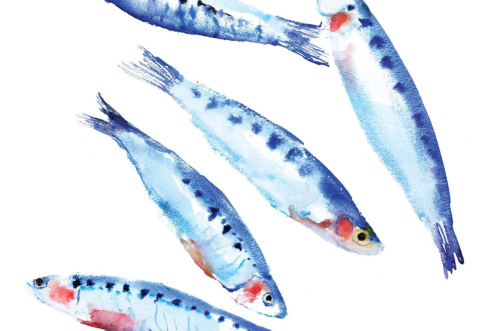 Sardines Print
