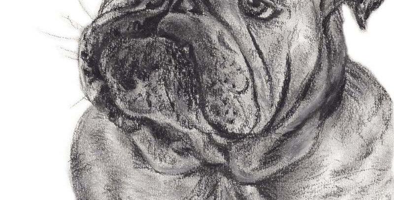 Benji the Bulldog