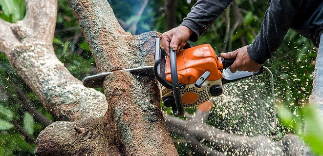 Tree-surgeon-in-Guildford-1080x523.jpg