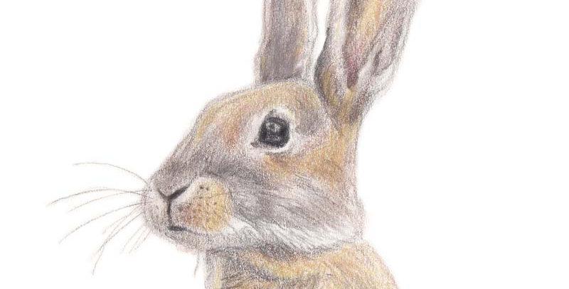 Dusty the Rabbit