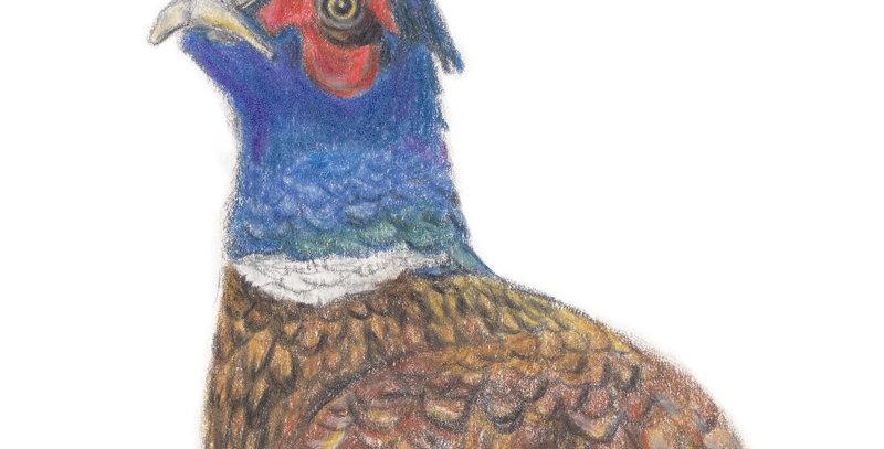 Phillip the Pheasant