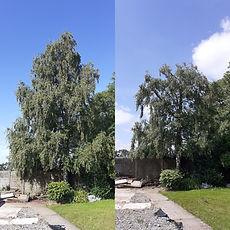 birch reduction ba.jpeg