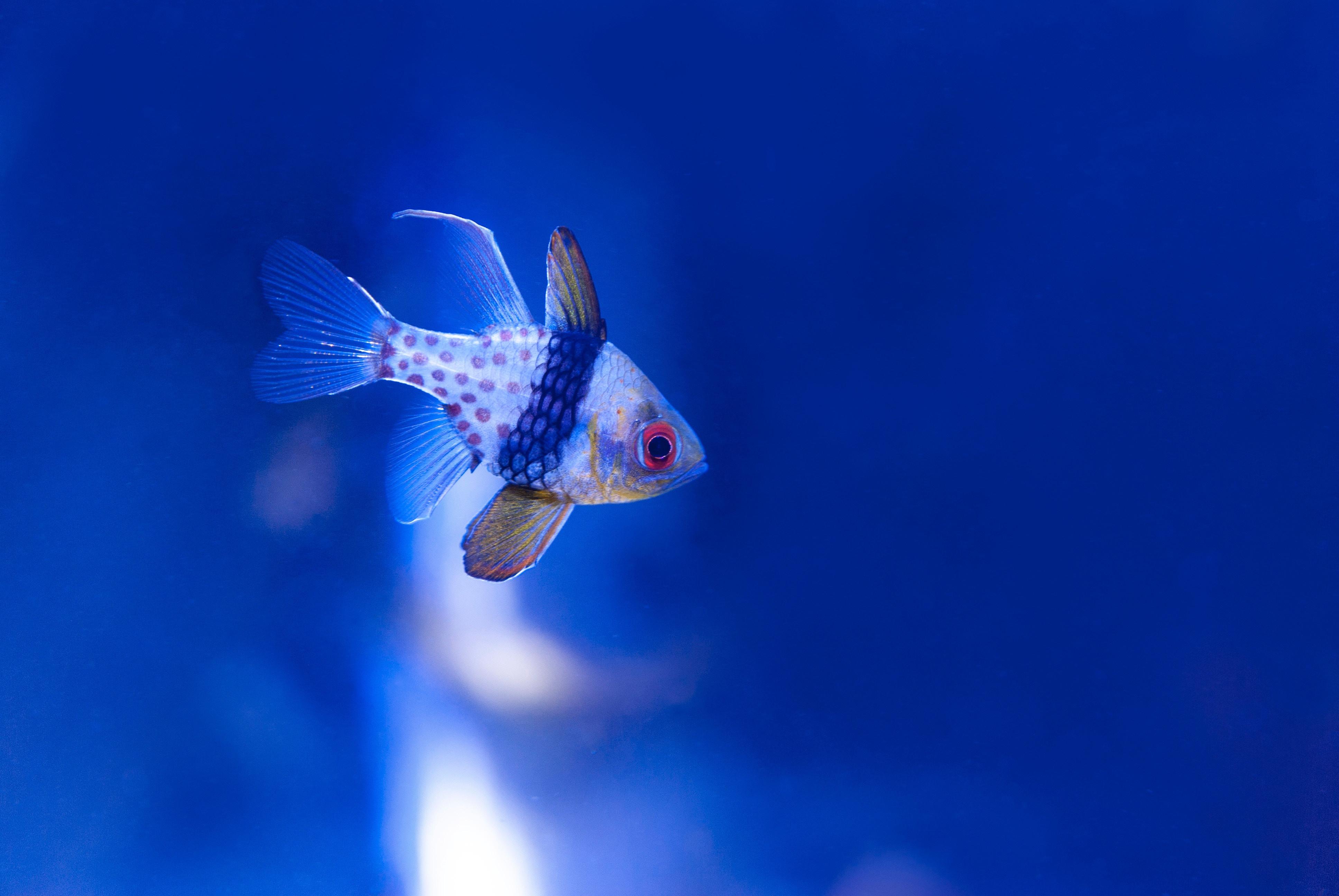 Aquarium Relocation