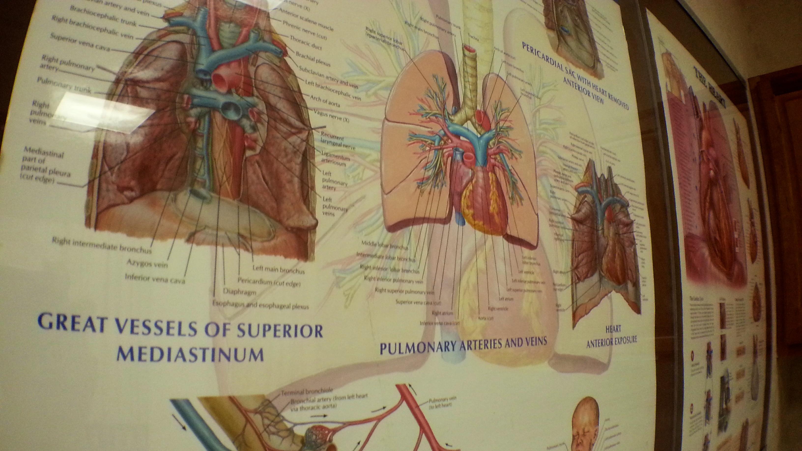 Chicago Illinois Nursing School Program LPN (4).jpg