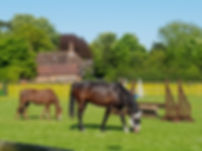 horses farm