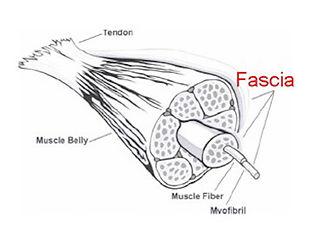 fascia-diagram.jpg