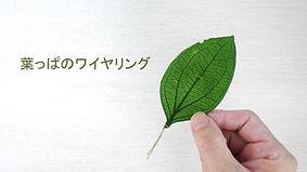 SnapShot_4.jpg