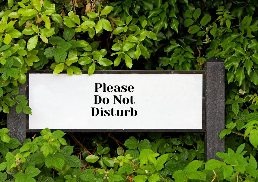 Please do not disturb sign set amongst trees