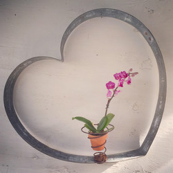 Heart with Spring