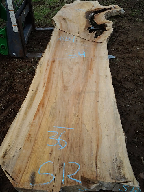 """Sycamore (S12)30-52"""" wide 168' tall 3' thick"""