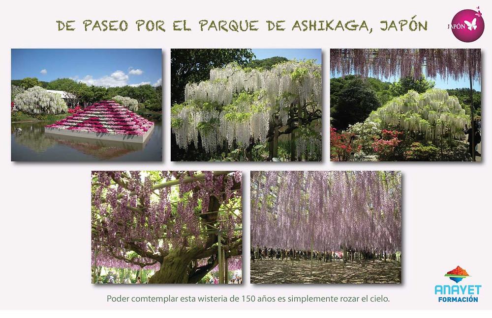 DE PASEO POR EL PARQUE JAPONES DE ASHIKAGA, JAPÓN