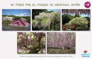 DE PASEO POR EL PARQUE JAPONES DE ASHIKAGA