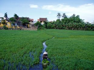 Without losing the traditions. Sin perder las tradiciones, 2003, Vietnam, Beatriz Sancho