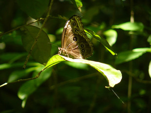 Butterfly, Mariposa, 2007, Costa Rica. Inés Bravo