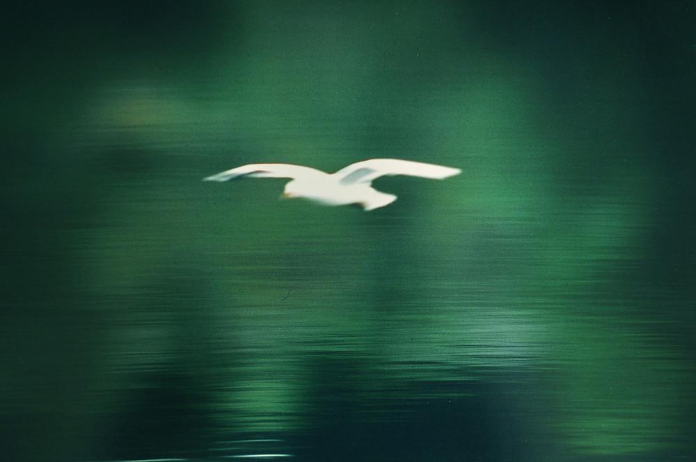 The seagull. La gaviota, 1997, Cumbria, Reino Unido, Ignacio Sánchez Bravo
