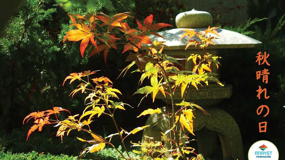 Japón. - Un fantástico día de otoño