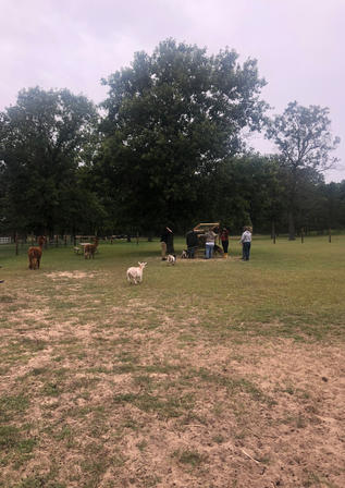 Students with goats.jpg