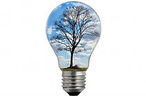 bulb-light-with-tree-1469090491A4w.jpg