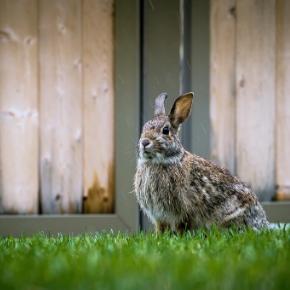 Understand noise and behaviour in your rabbit.