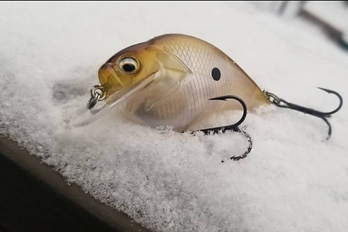 Clear Water Shiner
