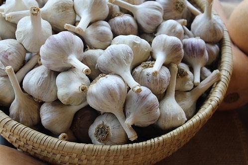 Garlic, 1/pk