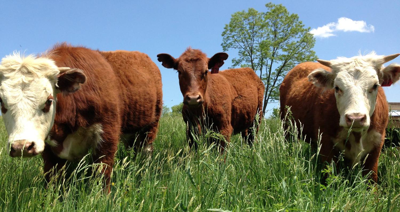 Brunty Farms I Pastured Beef