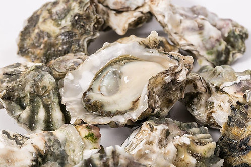 Oysters, 6 count