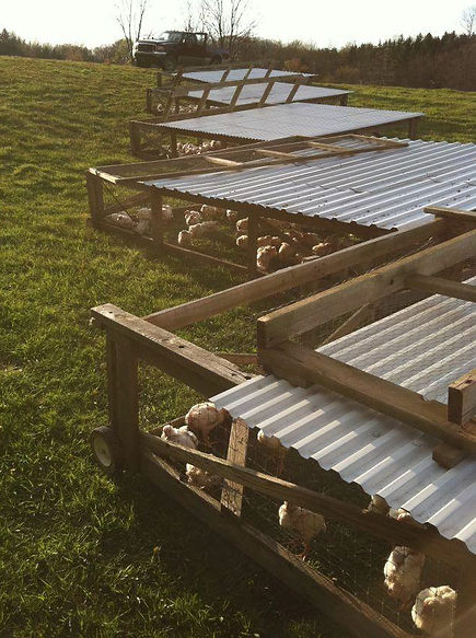 Chicken Tractors, Pasture Raised Chicken