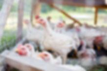 Fresh Chicken, Pasture Raised Chicken