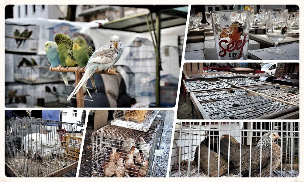 Antwerpen belgien low budget insidertipps sehenswürdigkeiten blog reise leuk Vogelmarkt