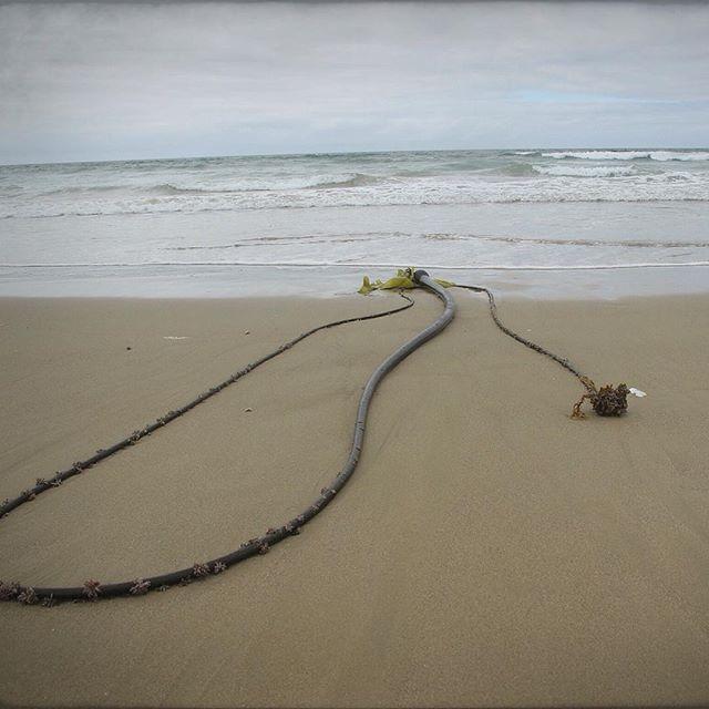 US-Westküste USA Reise Strand
