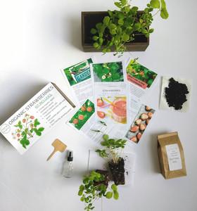 Organic StrawBerry Kit