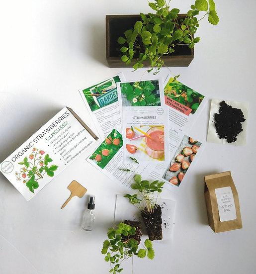 Organic Strawberry Kit (Live Strawberry Plants)