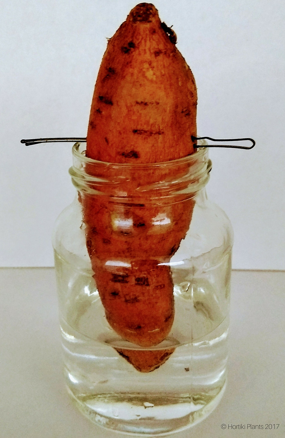 Image of sweet potato suspended in jar with water.