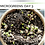 Thumbnail: Organic Microgreens Container Garden Kit