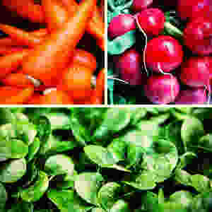 Delicious carrots radishes, and lettuce. Easy fall gardening