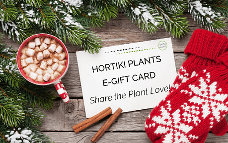 Gifted Hortiki holiday image(1).png