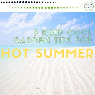 Summer container garden tips