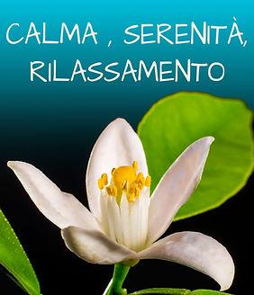 CALMA.jpg