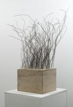7.concrete roots.jpg