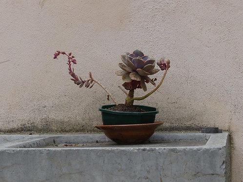 Aludibonde Foto 30x40 cm