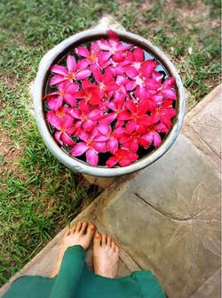 スリランカ アーユルヴェーダ旅の足とお花