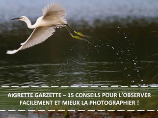 AIGRETTE GARZETTE : 15 CONSEILS POUR L'OBSERVER FACILEMENT ET MIEUX LA PHOTOGRAPHIER !