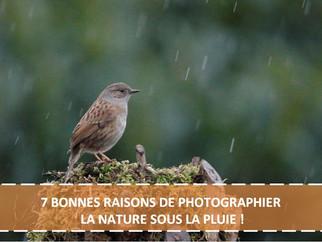 7 BONNES RAISONS DE PHOTOGRAPHIER LA NATURE SOUS LA PLUIE !
