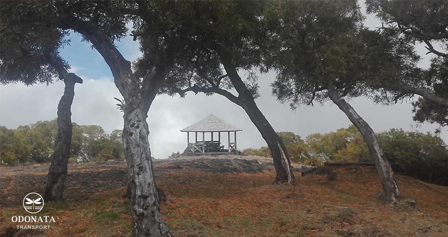 Forêt de Tamarins
