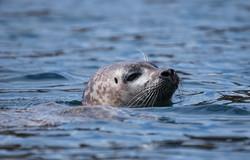 Local seal