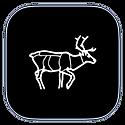 Finnmark Rein app ikon.png