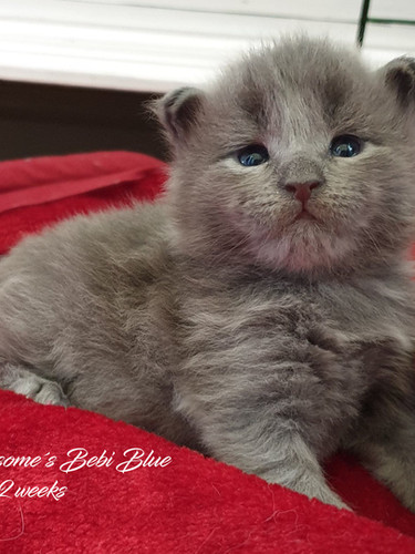Bebi Blue 2weeks.jpg