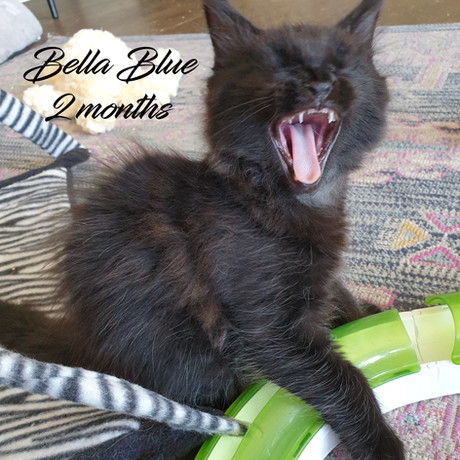 Bella Blue 2M Playing